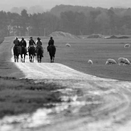 After The Gallop...Going Home