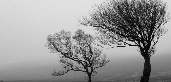 Sally Gap Trees Wicklow Landscape Paul O'Rourke Photography